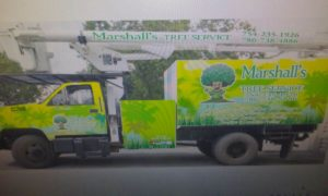 local tree service in hallandale beach