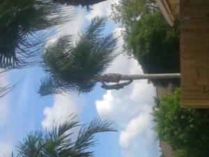 weston tree service