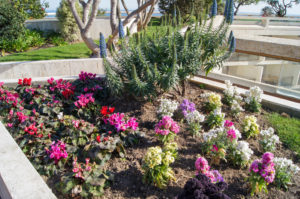 Hallandale beach Landscaping