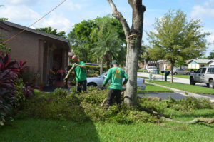 Tree Services in miramar