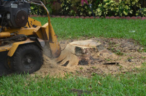 landscaping Fort Lauderdale