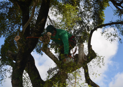 Pompano Beach Tree Service