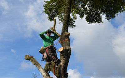 5 Questions to Ask Your Tree Care Service Provider
