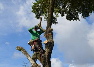 Marshall's-Tree-Service-05
