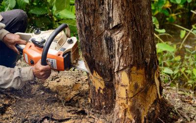 Non-Hazardous and Hazardous Tree Removal