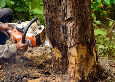 Marshall's-Tree-Service-06