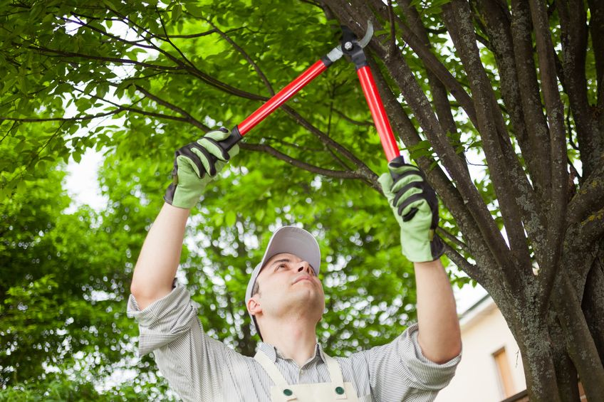 Why you should Prune your Trees!