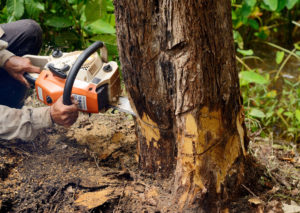 tree services from marshalls in margate fl