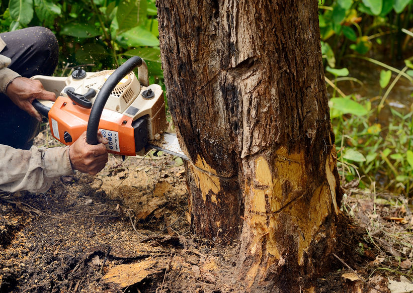 Highland Beach FL tree service