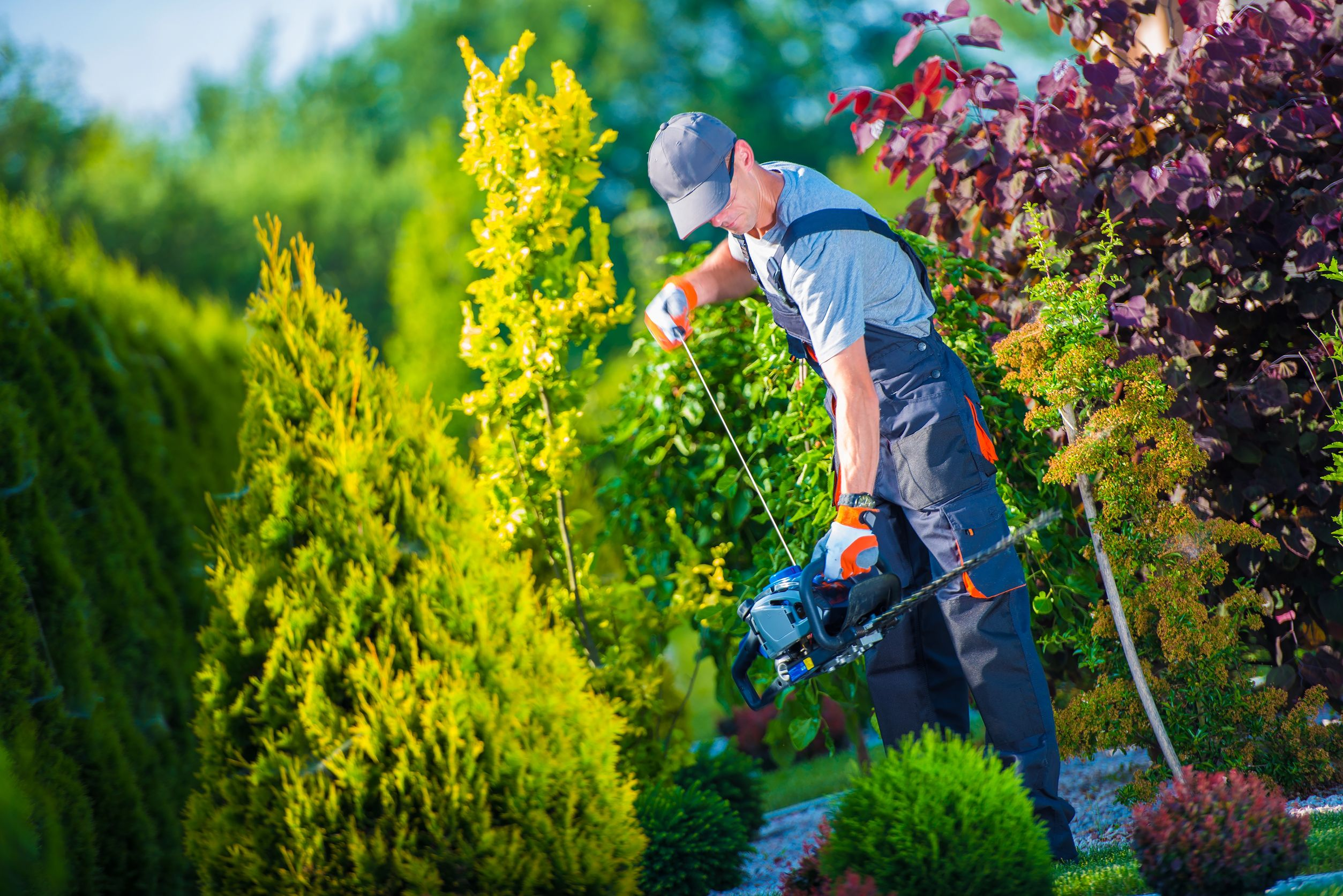 Tequesta FL landscaping & tree services