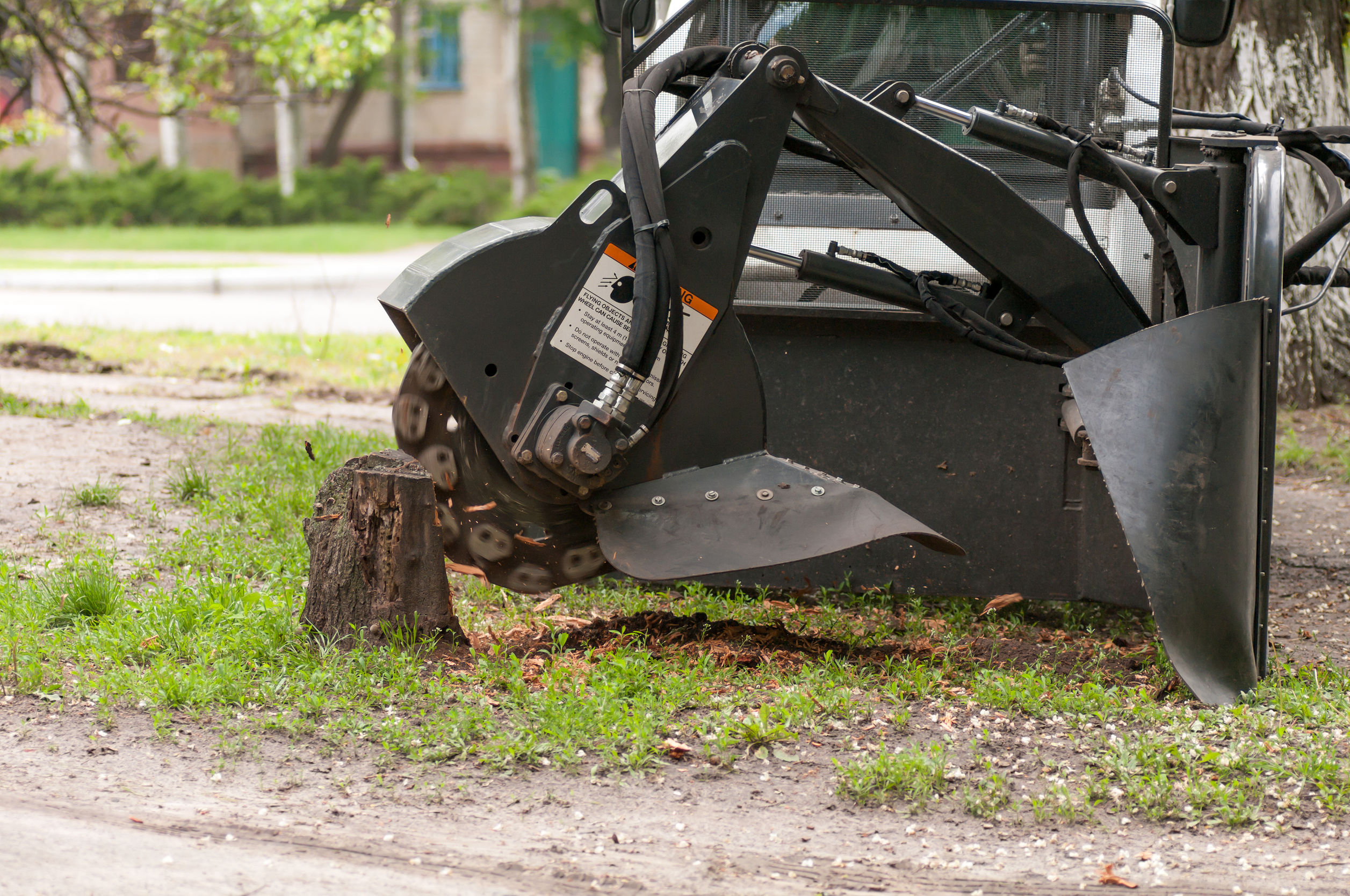 Doral FL Tree Services and Landscaping