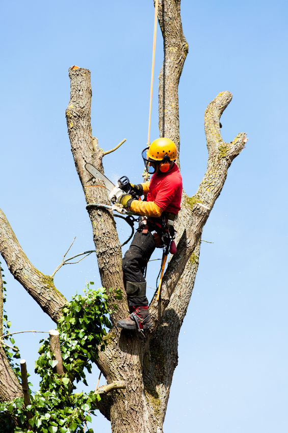 arborist performing tree services in greenacres fl