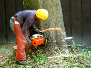 arborist cutting down a tree and providing lake worth beach tree services