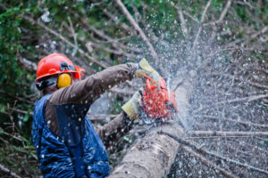 arborist cutting tree and providing tree services and landscaping in pinecrest