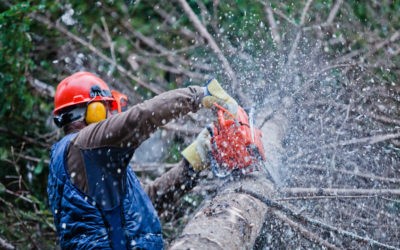 What to Do When a Tree Falls On Your Home