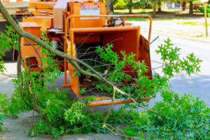 tree services in golden beach