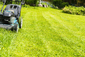 Landscaping Services in Miami, Florida