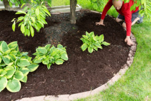 landscaping in Fort Lauderdale