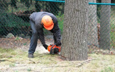5 Reasons Why Tree Removal is Important