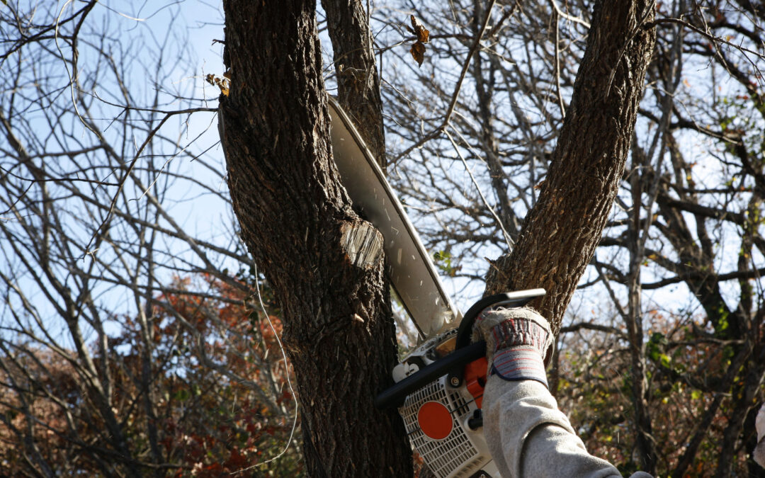 All You Need to Know About Tree Trimming