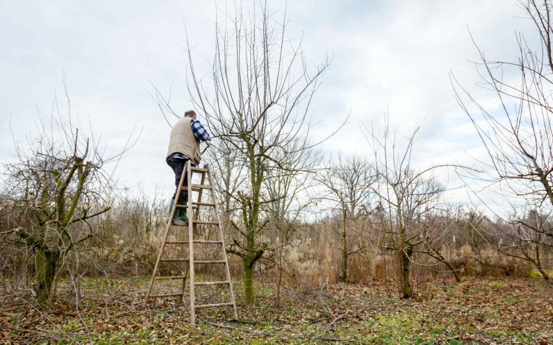 How to Prepare Your Trees for Hurricane Season