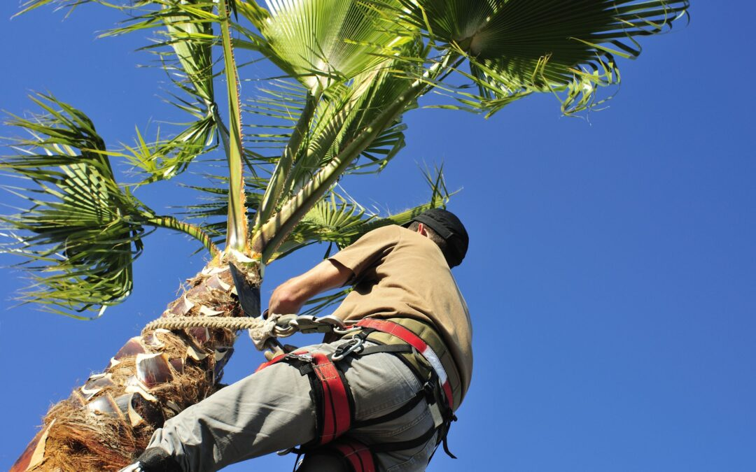 How to Prepare Your Palm Trees for Hurricane Season