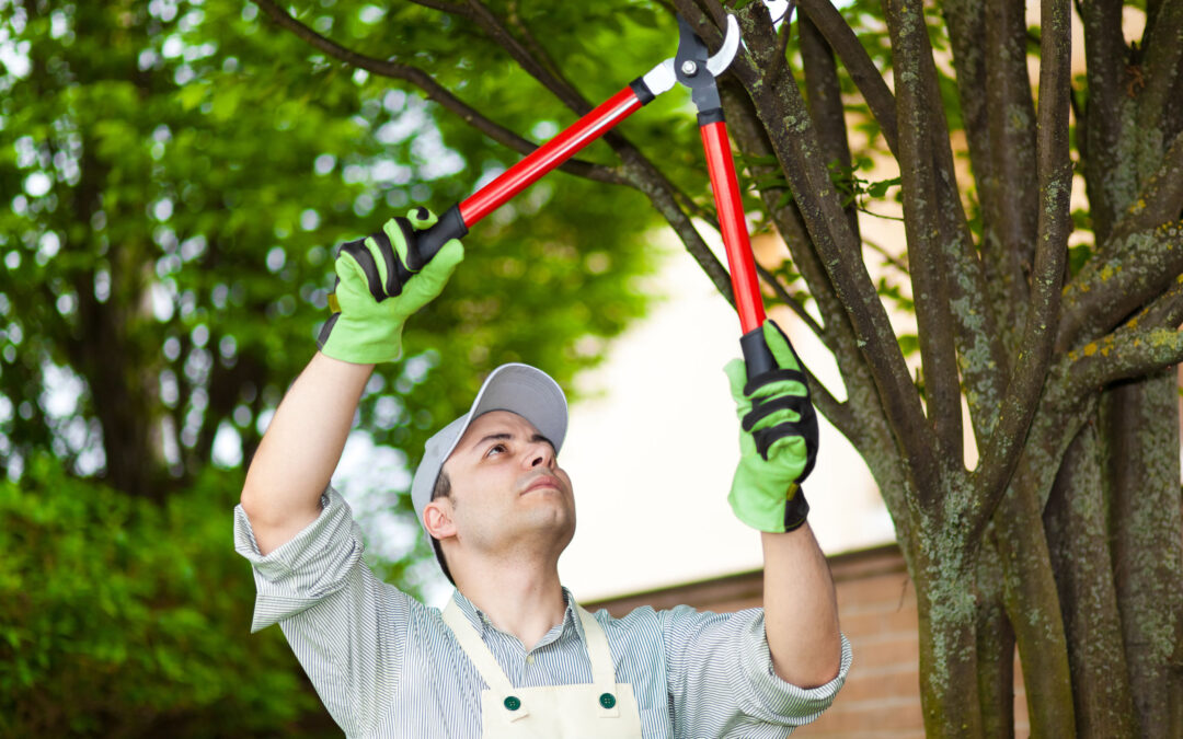 3 Benefits Of Pruning Your Trees Prior To Hurricane Season