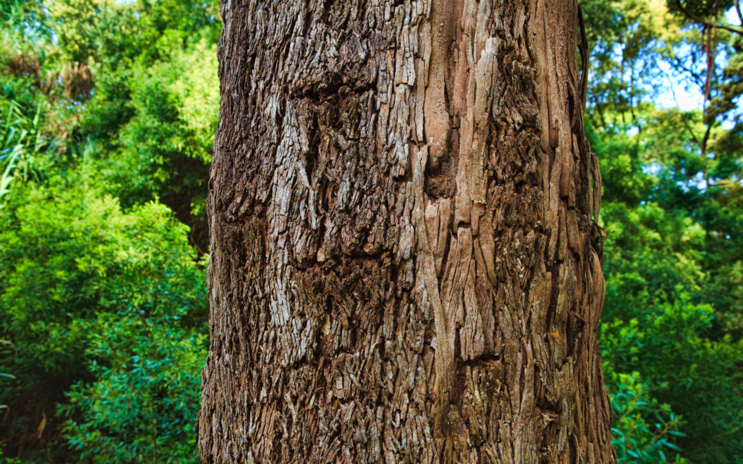 Top Tips for Identifying a Hazardous Tree